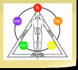 kinesologia